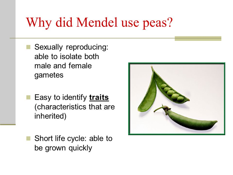 Why did Mendel use peas Sexually reproducing: able to isolate both male and female gametes.