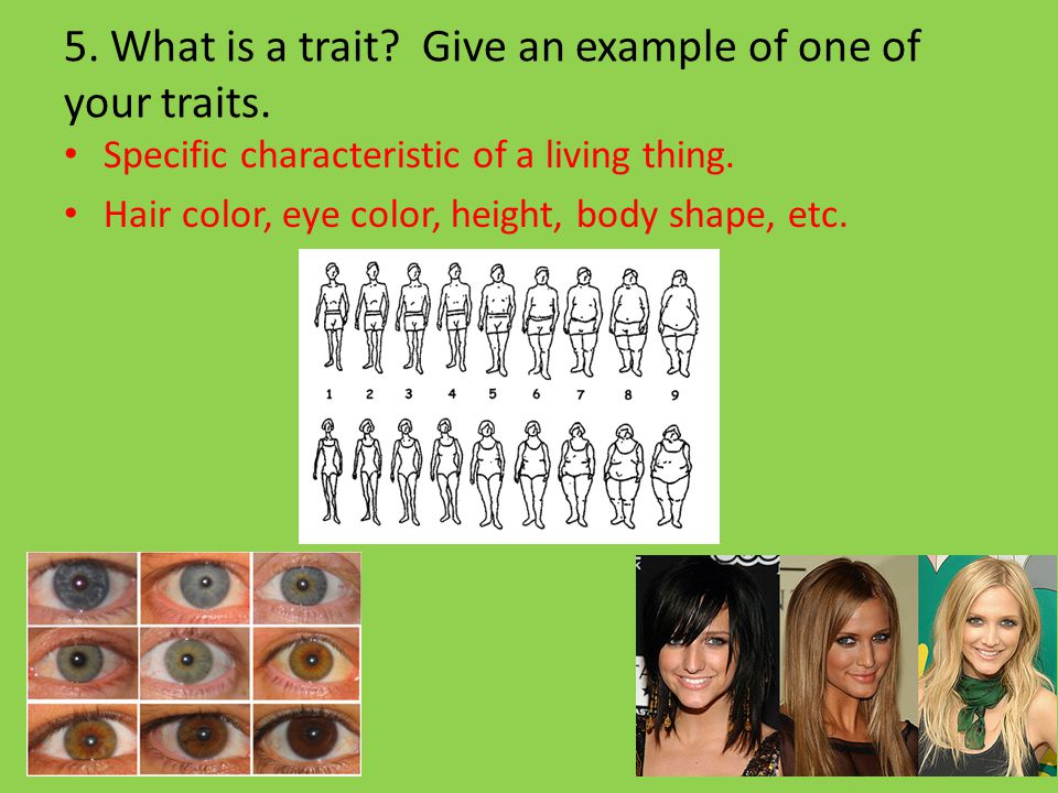 5. What is a trait Give an example of one of your traits.