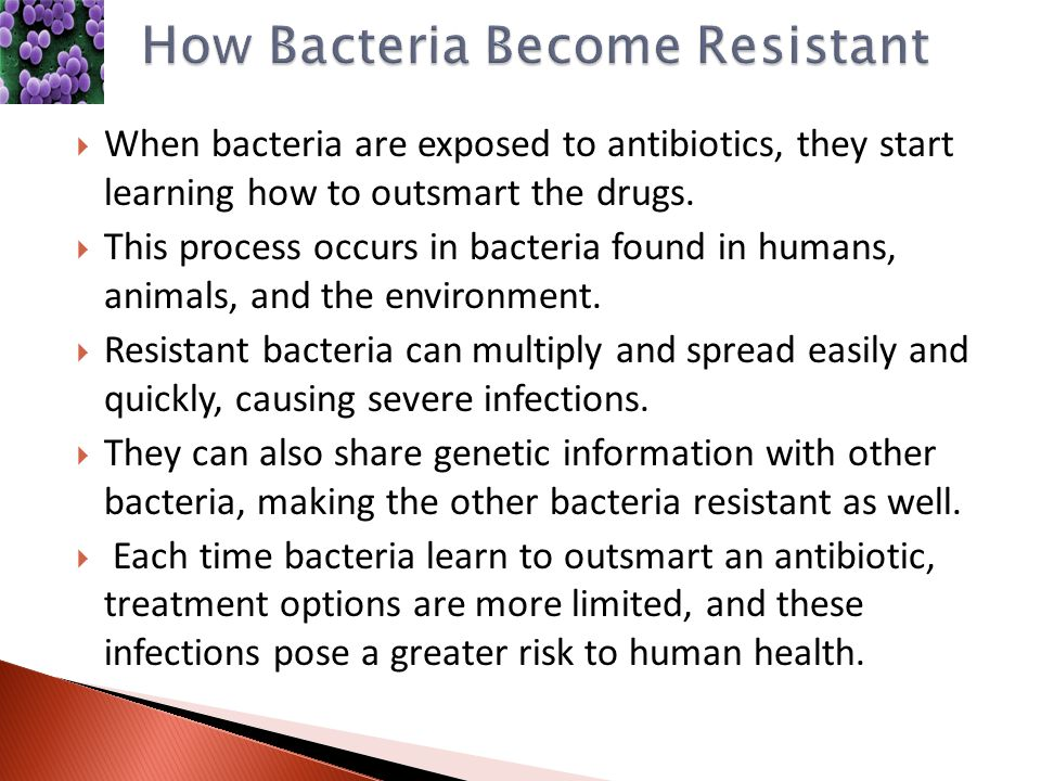 Bacteria: What you need to know - Medical News Today