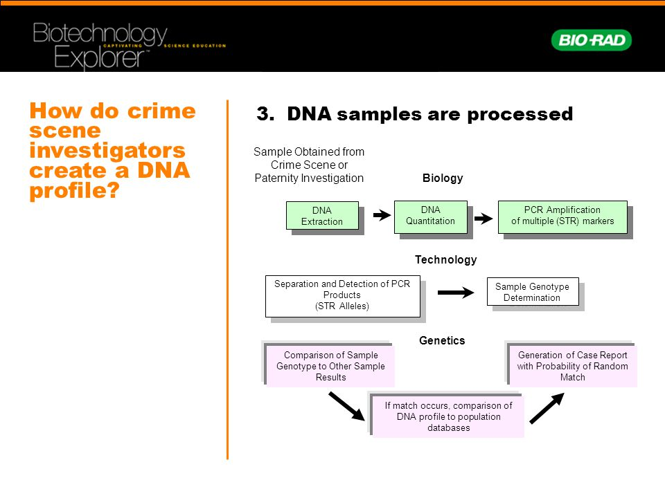 dna profiling for crime investigation Web links education k–12 creating a dna fingerprint is an online activity that describes the uses of dna fingerprinting crime scene investigation asks.