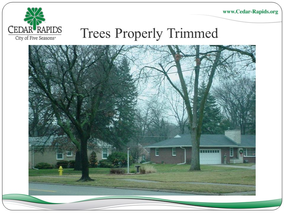 Trees Properly Trimmed
