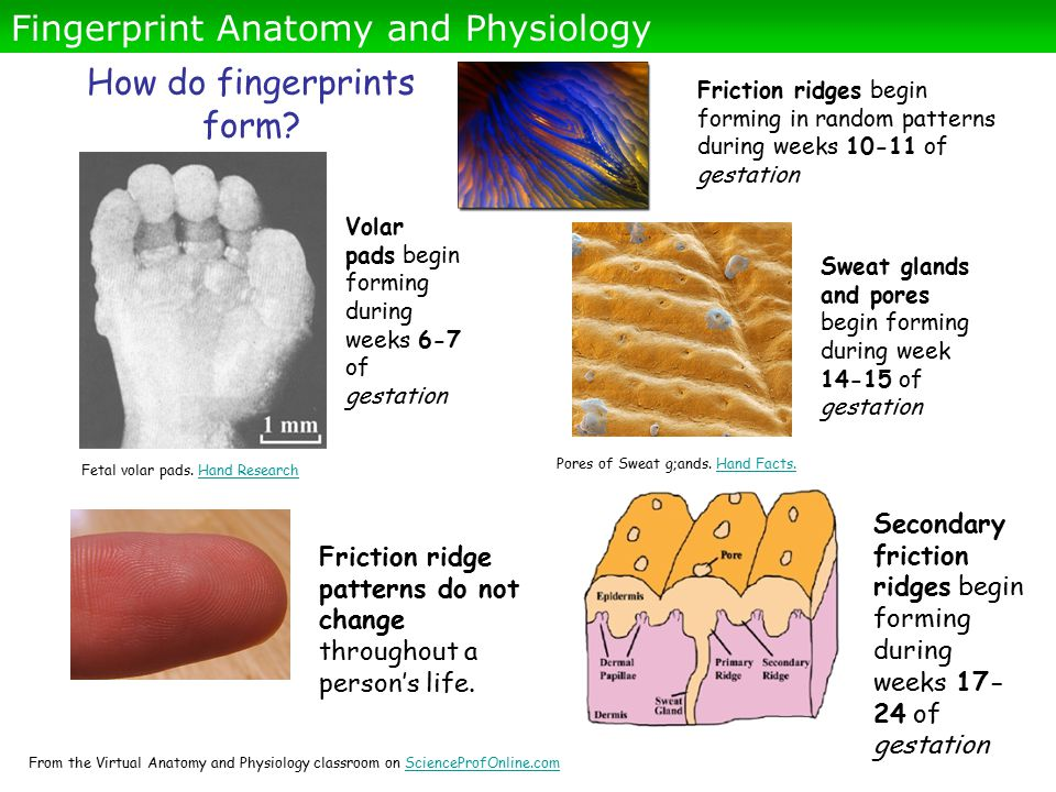 About Science Prof Online PowerPoints - ppt download