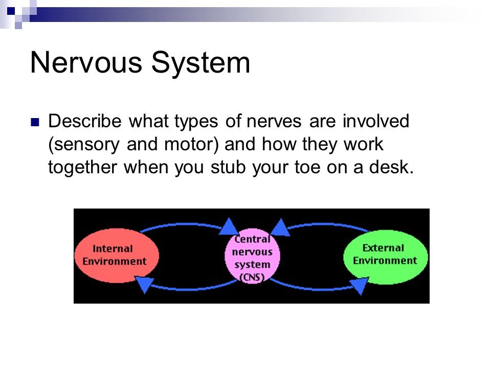 what happens when you stub your toe nervous system