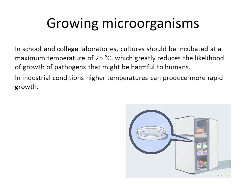 microorganisms growth Of possible unfavorable soil properties in disturbed soils will be focused to analyse the possible impact of associated microorganisms on plants growth and vitality.