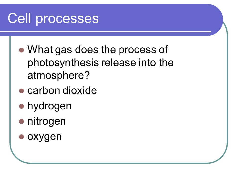 does chemosynthesis release oxygen Pigments absorb sunlight and release light intensity– as light intensity increase so does the rate of photosynthesis till photosynthesis/chemosynthesis.