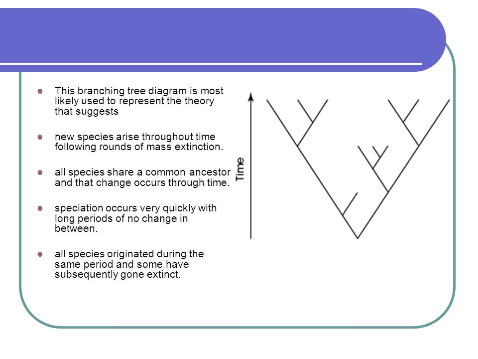 how to use a branching tree diagram