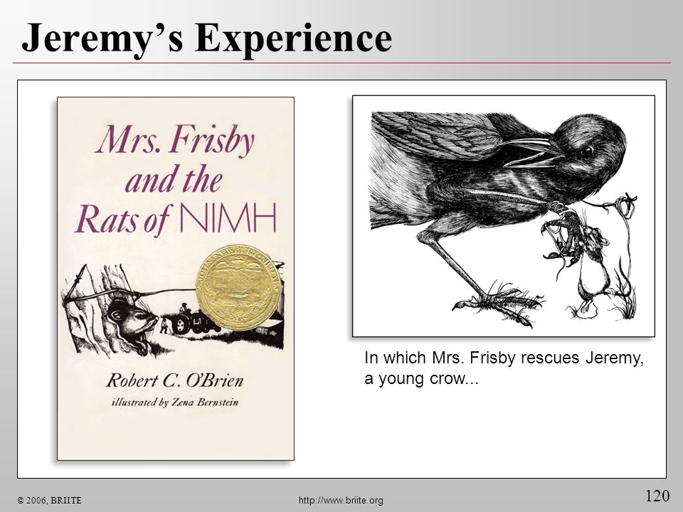 Jeremy's Experience In which Mrs. Frisby rescues Jeremy, a young crow...