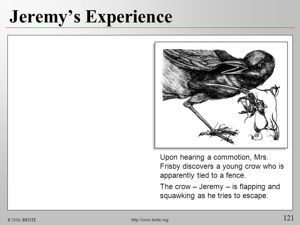 Jeremy's Experience Upon hearing a commotion, Mrs. Frisby discovers a young crow who is apparently tied to a fence.