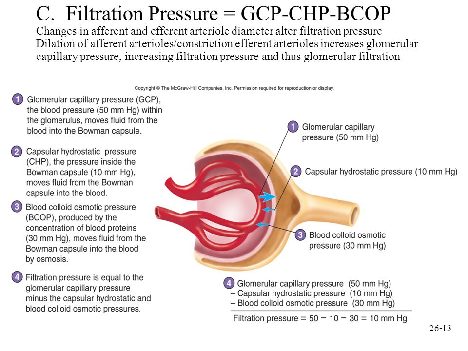 The glomerular filtration rate (GFR) will decrease if:?