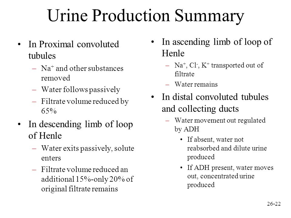 urine production Three-hour urine output following fluid ingestion fluid ingested  (10 ml) water 1% ethyl alcohol 5% ethyl alcohol average urine output (ml.