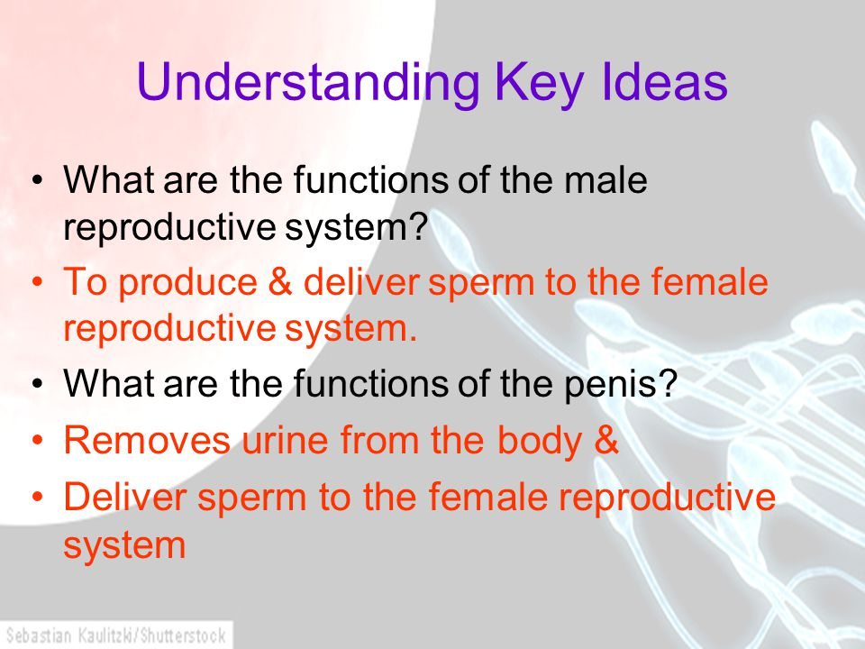 Understanding Key Ideas