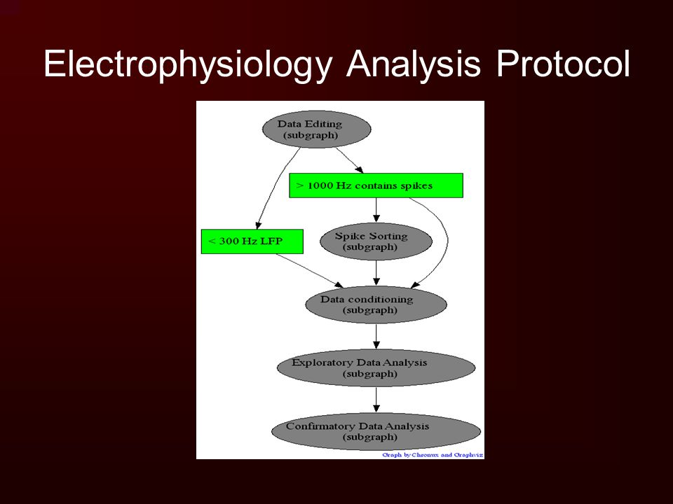 Electrophysiology Analysis Protocol