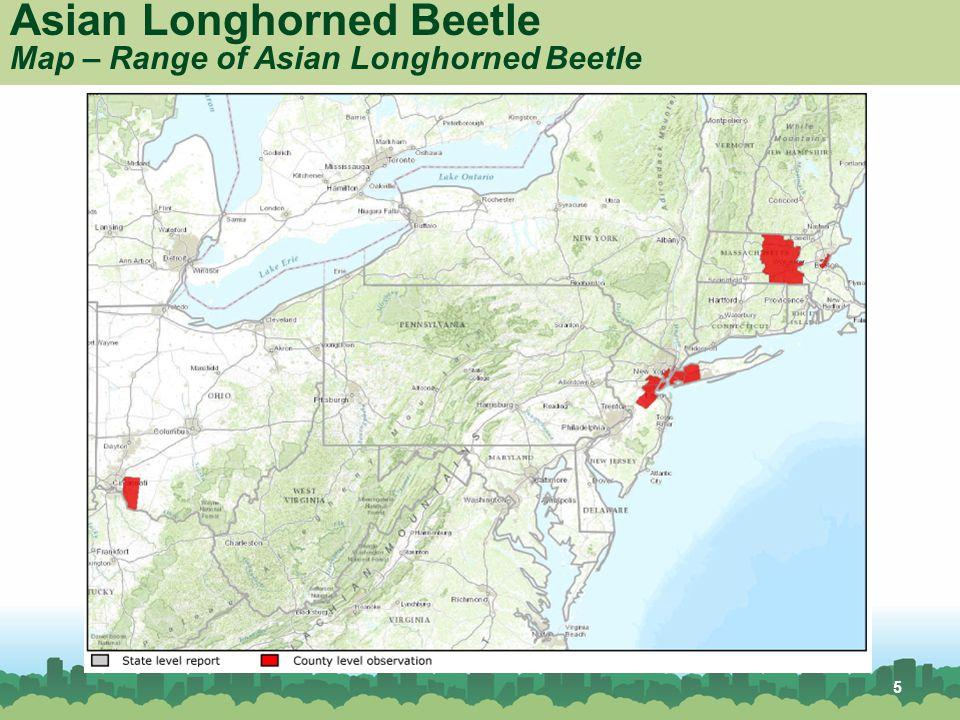 Asian Longhorned Beetle Ppt Video Online Download - Map of asian longhorned beetle us