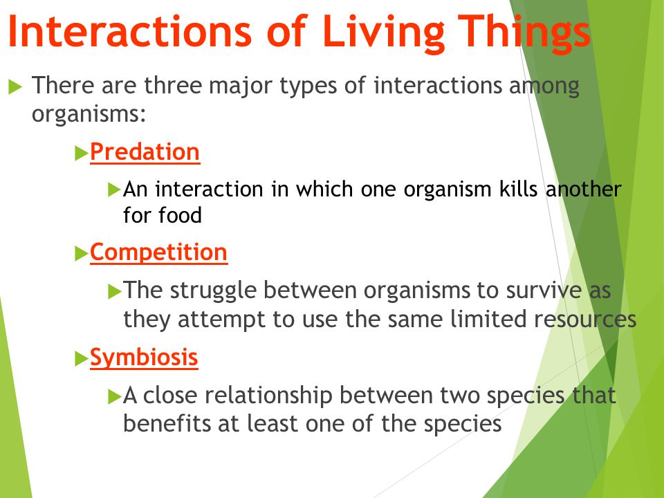 the relationship between species and organisms meaning