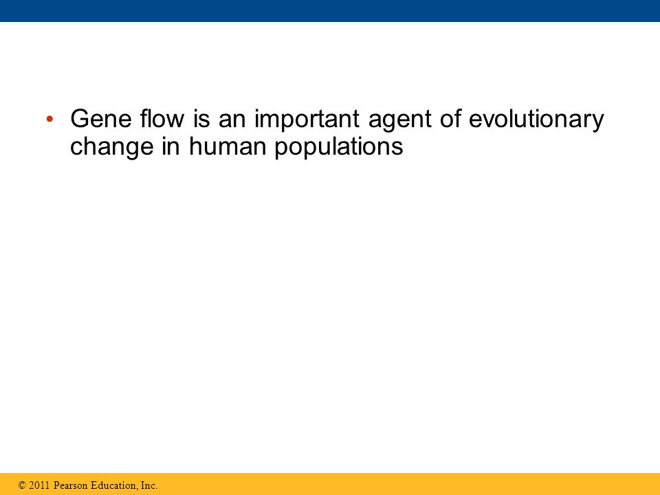 Gene flow is an important agent of evolutionary change in human populations