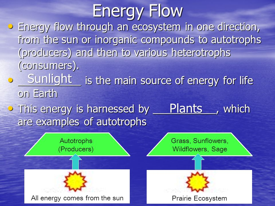 Energy Flow Sunlight Plants
