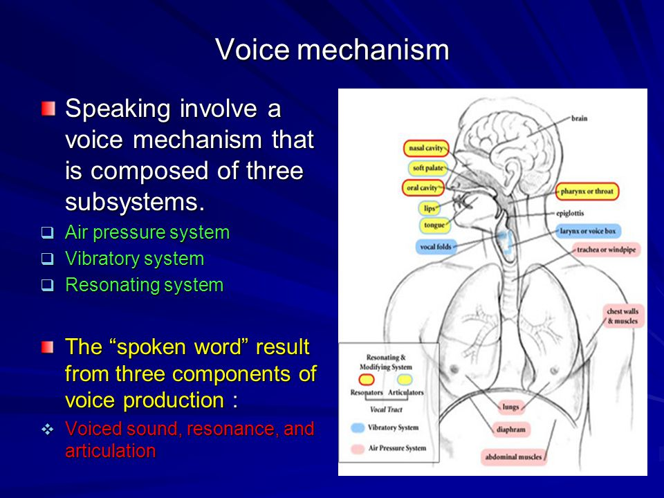 Voice mechanism Speaking involve a voice mechanism that is composed of three subsystems. Air pressure system.