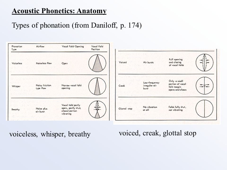 Types of phonetics Term paper Sample