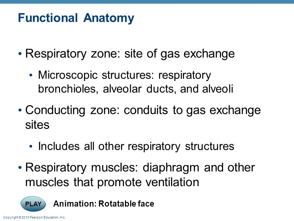 Respiratory zone: site of gas exchange