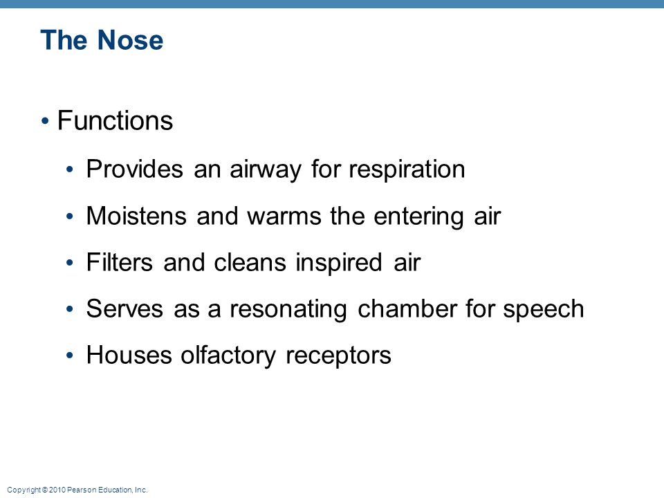 The Nose Functions Provides an airway for respiration