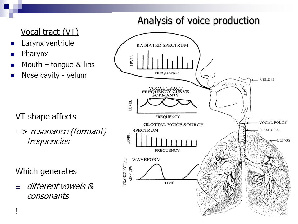Analysis of voice production