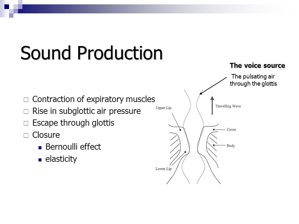 Sound Production Contraction of expiratory muscles