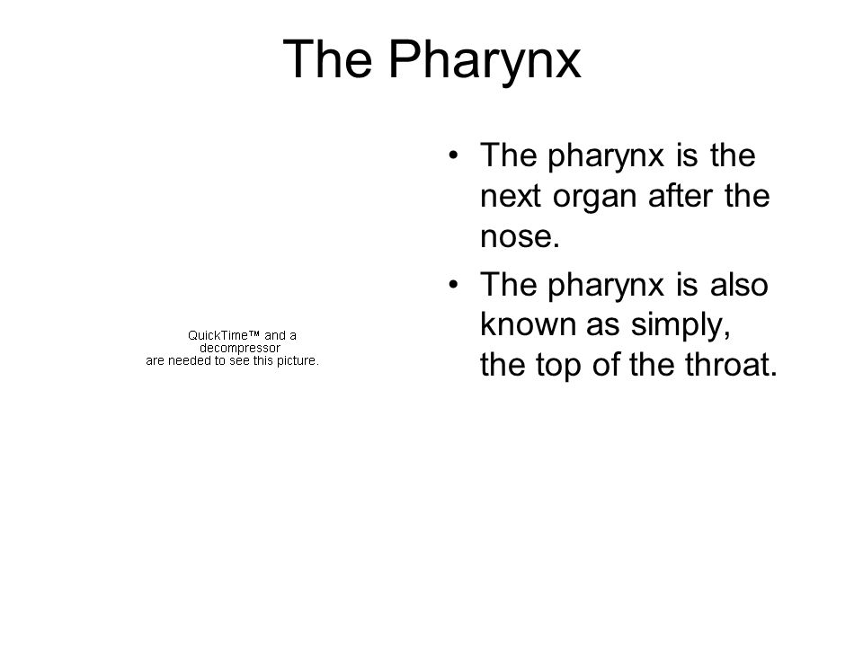 The Pharynx The pharynx is the next organ after the nose.