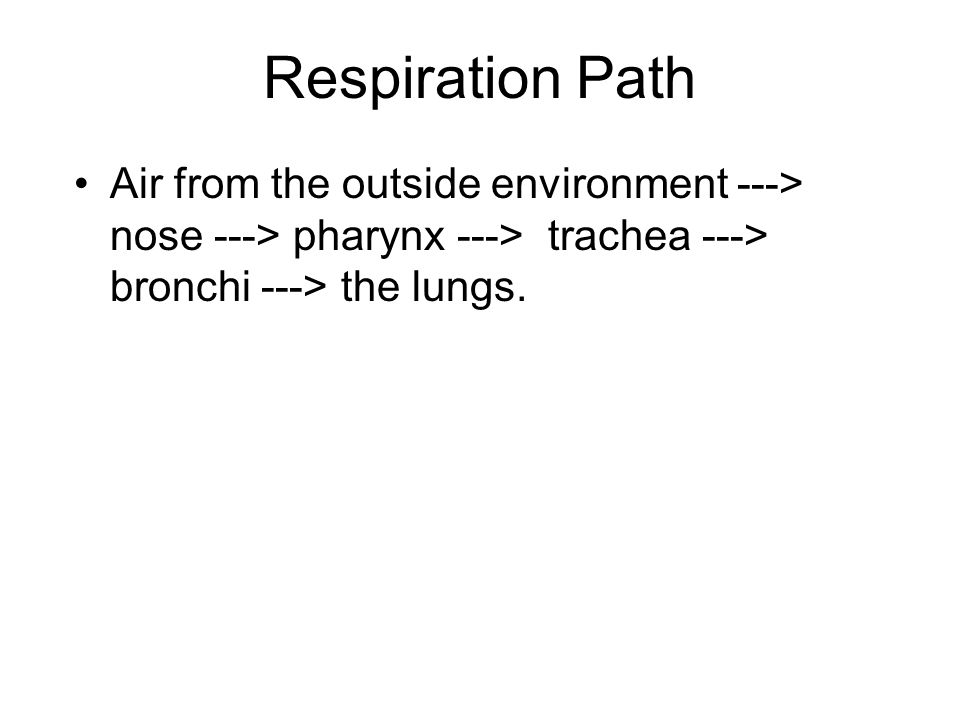 Respiration Path Air from the outside environment ---> nose ---> pharynx ---> trachea ---> bronchi ---> the lungs.