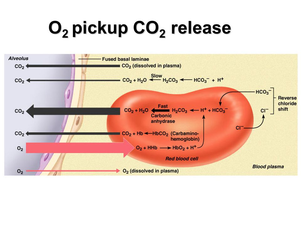 O2 pickup CO2 release
