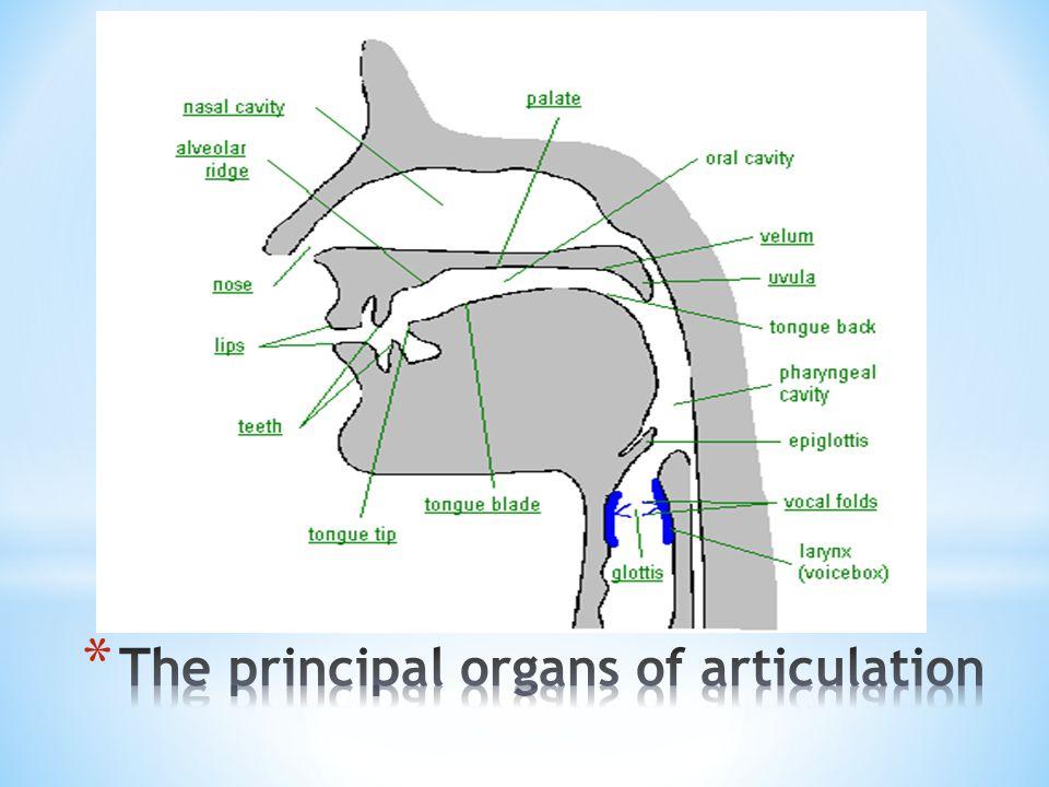 Articulation anatomy definition
