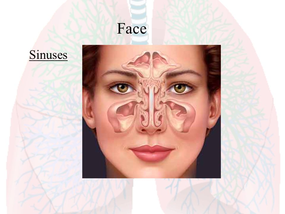 Face Sinuses