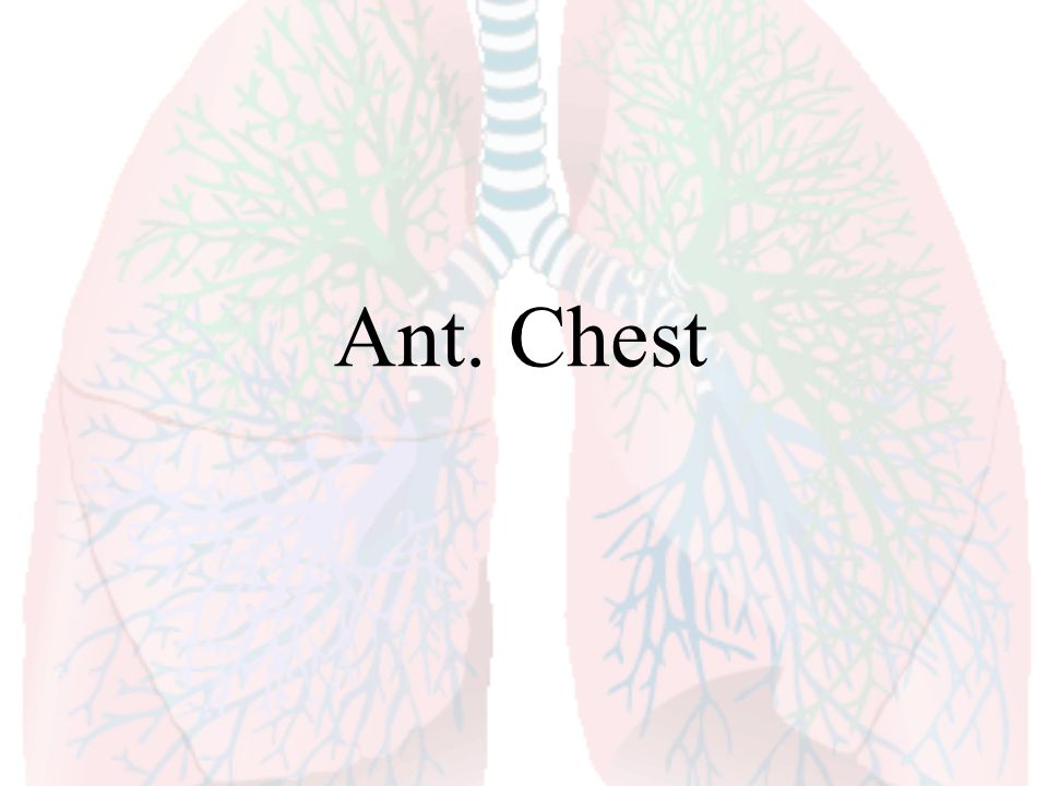 Ant. Chest