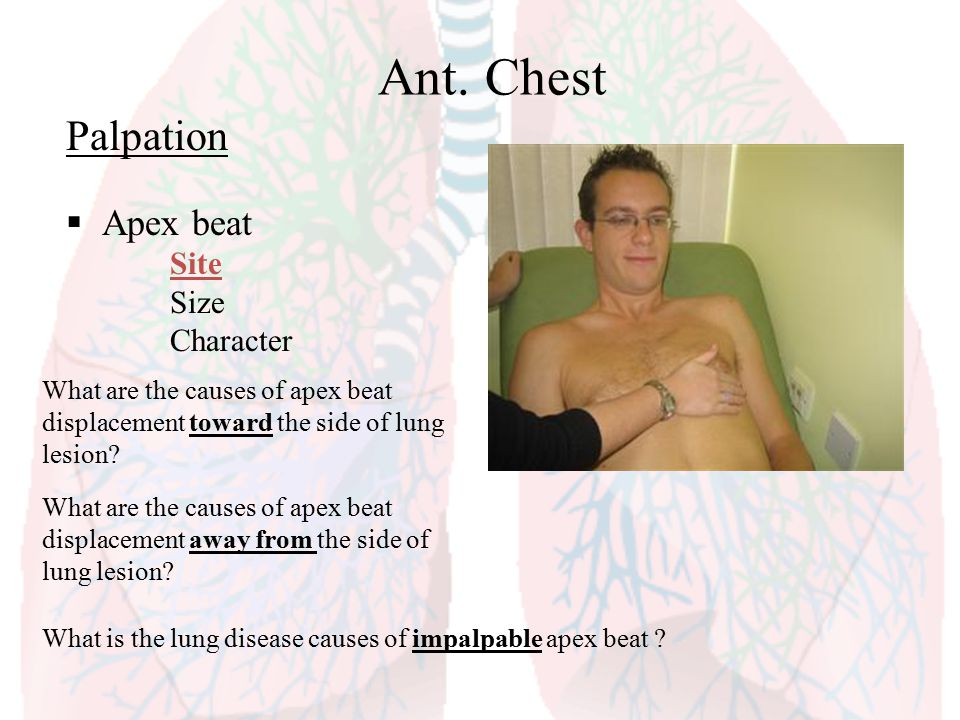 Ant. Chest Palpation Apex beat Site Size Character