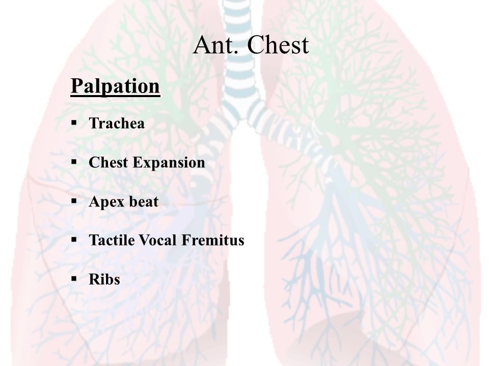 Ant. Chest Palpation Trachea Chest Expansion Apex beat