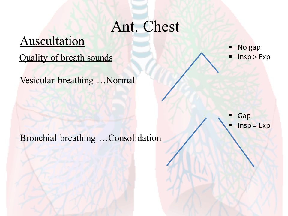 Ant. Chest Auscultation Quality of breath sounds