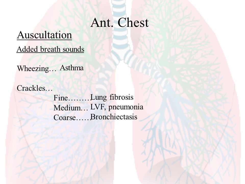 Ant. Chest Auscultation Added breath sounds Wheezing… Asthma Crackles…