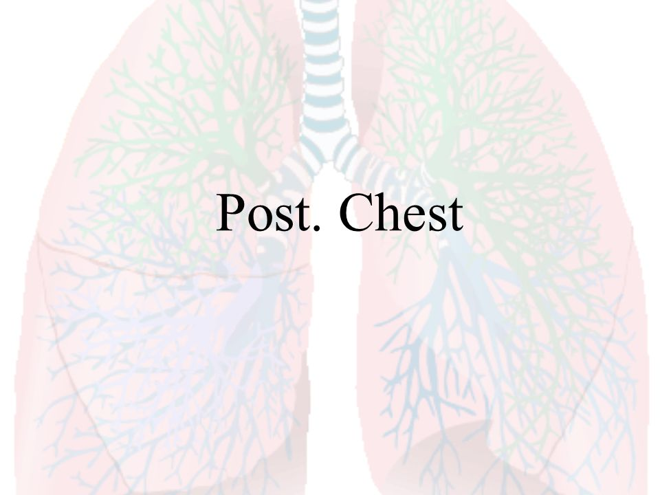 Post. Chest