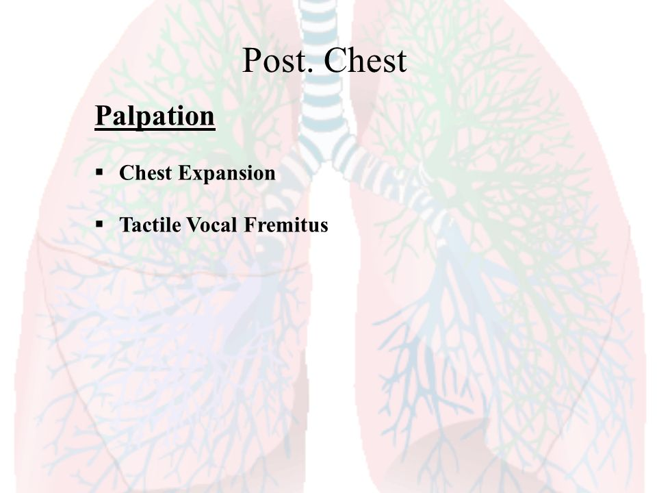 Post. Chest Palpation Chest Expansion Tactile Vocal Fremitus