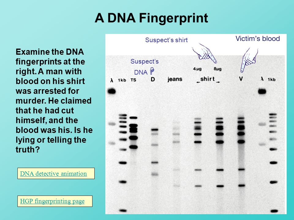 dna fingerprinting ppt video online download. Black Bedroom Furniture Sets. Home Design Ideas