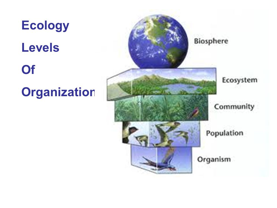 The Biosphere Ppt Download