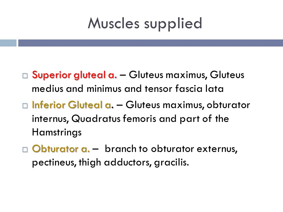 Muscles supplied Superior gluteal a. – Gluteus maximus, Gluteus medius and minimus and tensor fascia lata.
