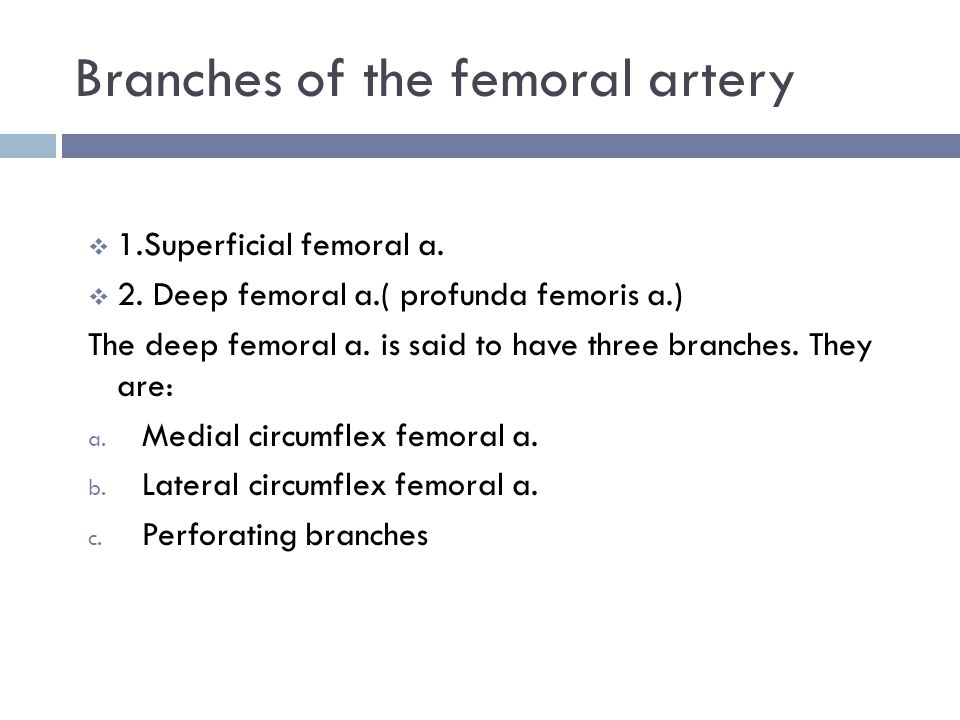 Branches of the femoral artery