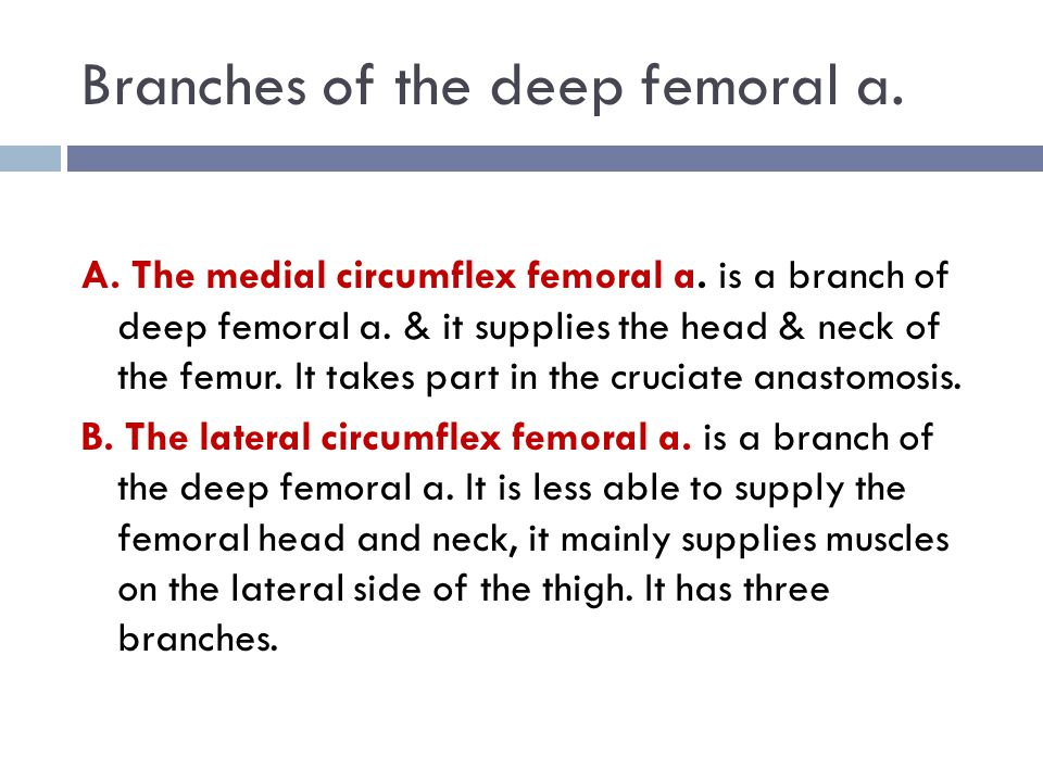 Branches of the deep femoral a.