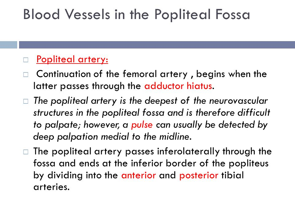 Blood Vessels in the Popliteal Fossa
