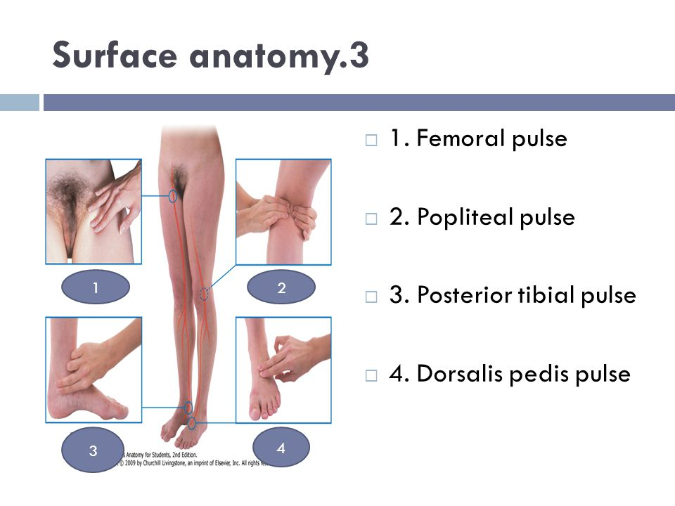 Surface anatomy.3 1. Femoral pulse 2. Popliteal pulse