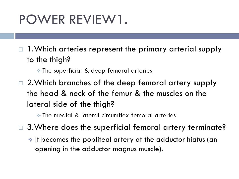 POWER REVIEW1. 1.Which arteries represent the primary arterial supply to the thigh The superficial & deep femoral arteries.