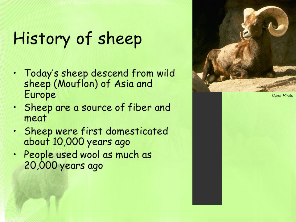 the early history of sheep and wool industry Victoria's sheep meat and wool industry structure of victoria's sheep meat and wool growing industry between the 1950s and the early 1980s.