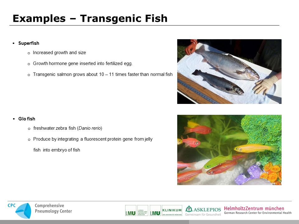 Jessica g tzfried methods seminar ppt video online download for Examples of fish