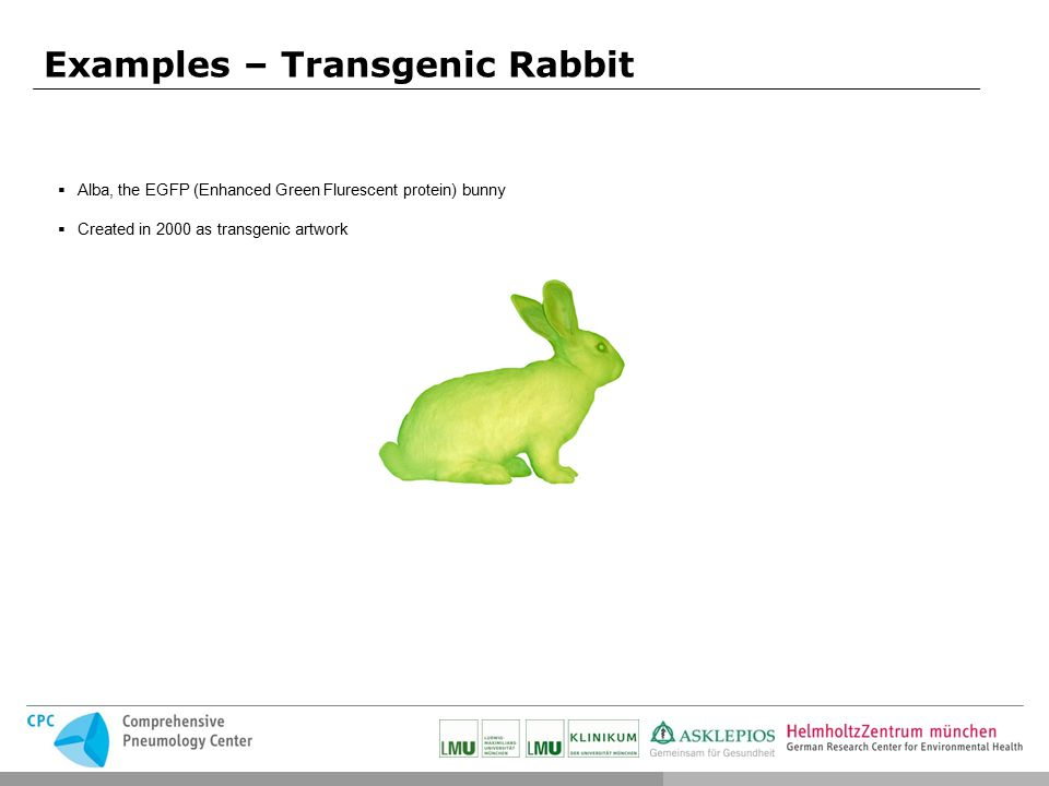 the effects of releasing a transgenic organism into nature Prior art keywords human insulin mouse transgenic mice prior art date 1986-05-20 legal status (the legal status is an assumption and is not a legal conclusion.