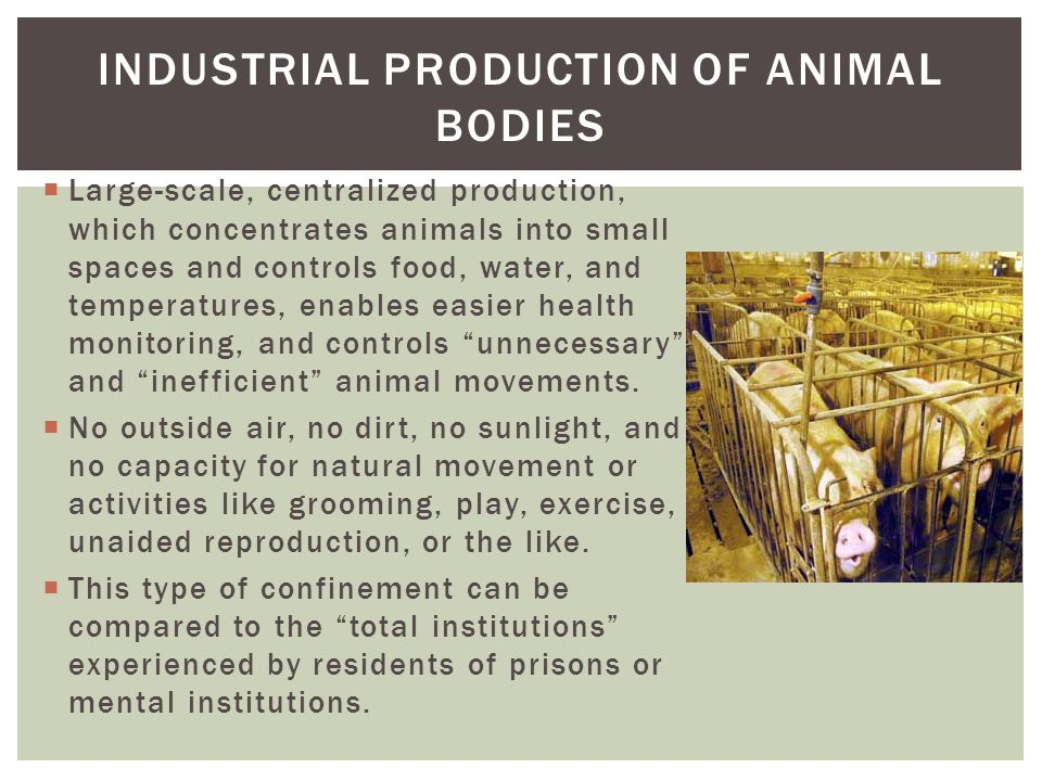 animals in small spaces animals and society an introduction to human animal studies ppt